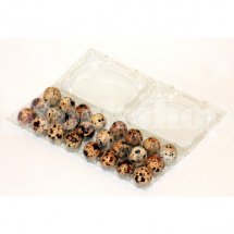 12 QUAIL EGG BOX (SINGLE)
