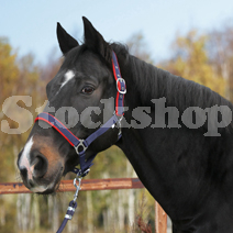 Matching Headcollar & Lead Rope Sets