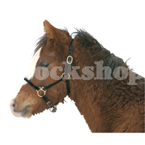 Foal Head Collars